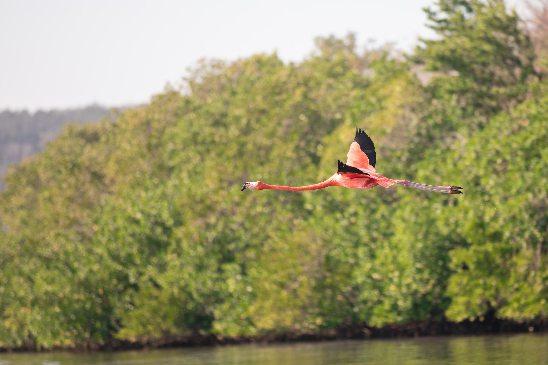 Bild: Guanaroca Lagoon Flamingos Kuba bei Cienfuegos