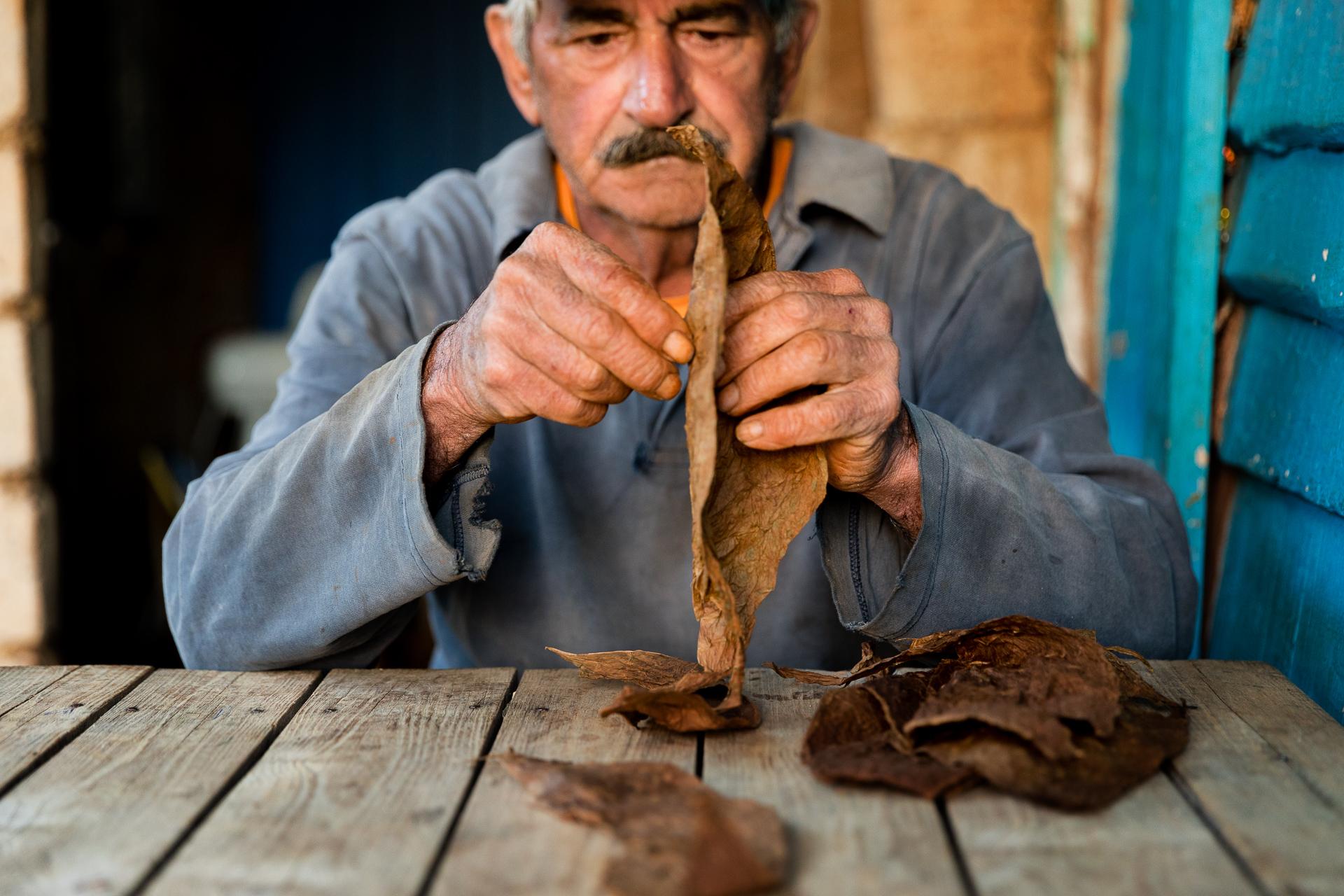 Besuch einer Tabakplantage im Vinales Valles in Kuba Tabakbauer Zigarre