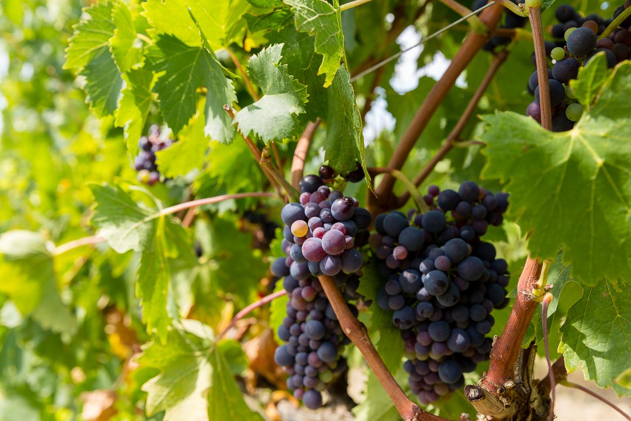 BIld: toskanischer Wein Italien Chianti