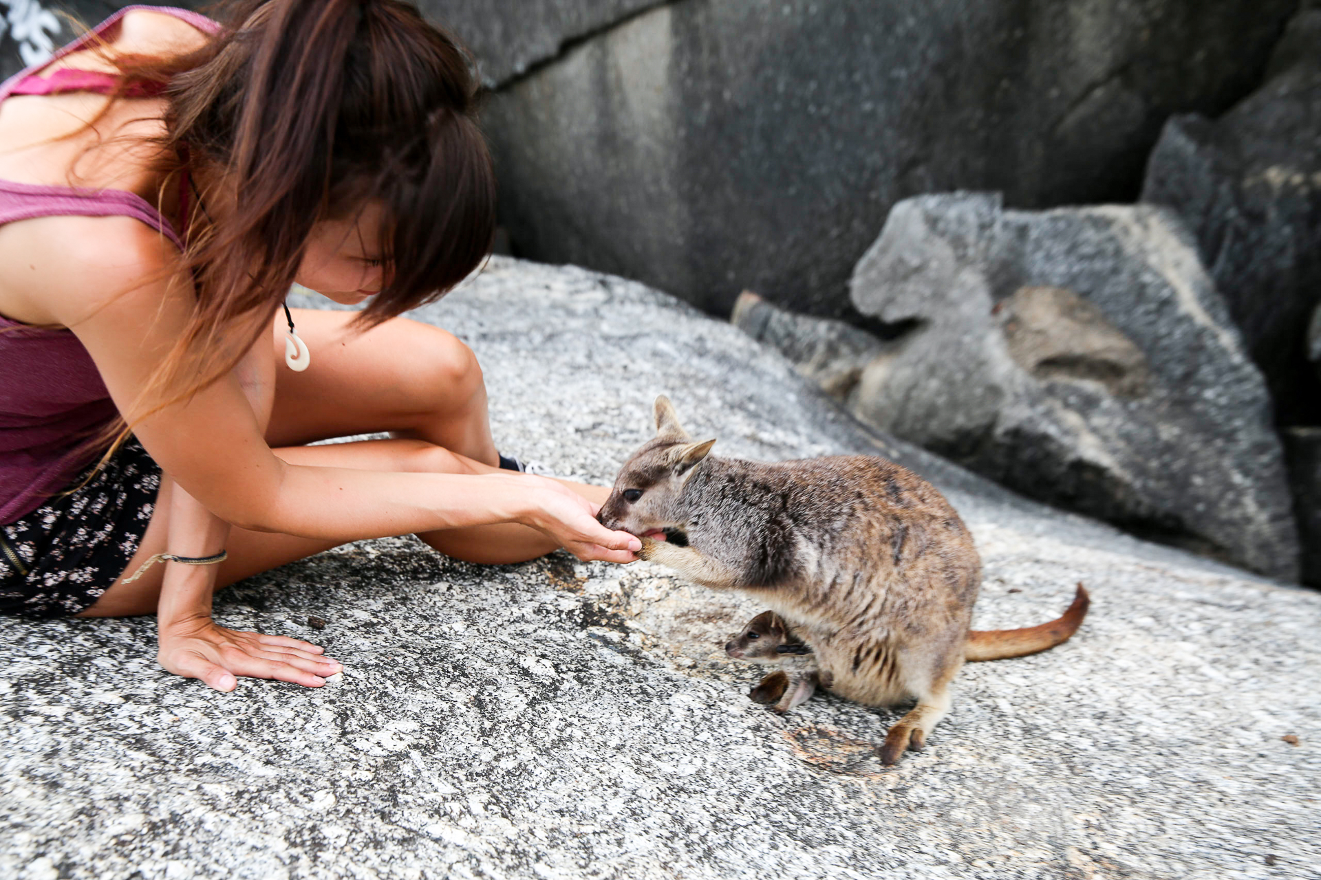 Bild: wilde Wallabies in Australien füttern Ostküste Mareeba