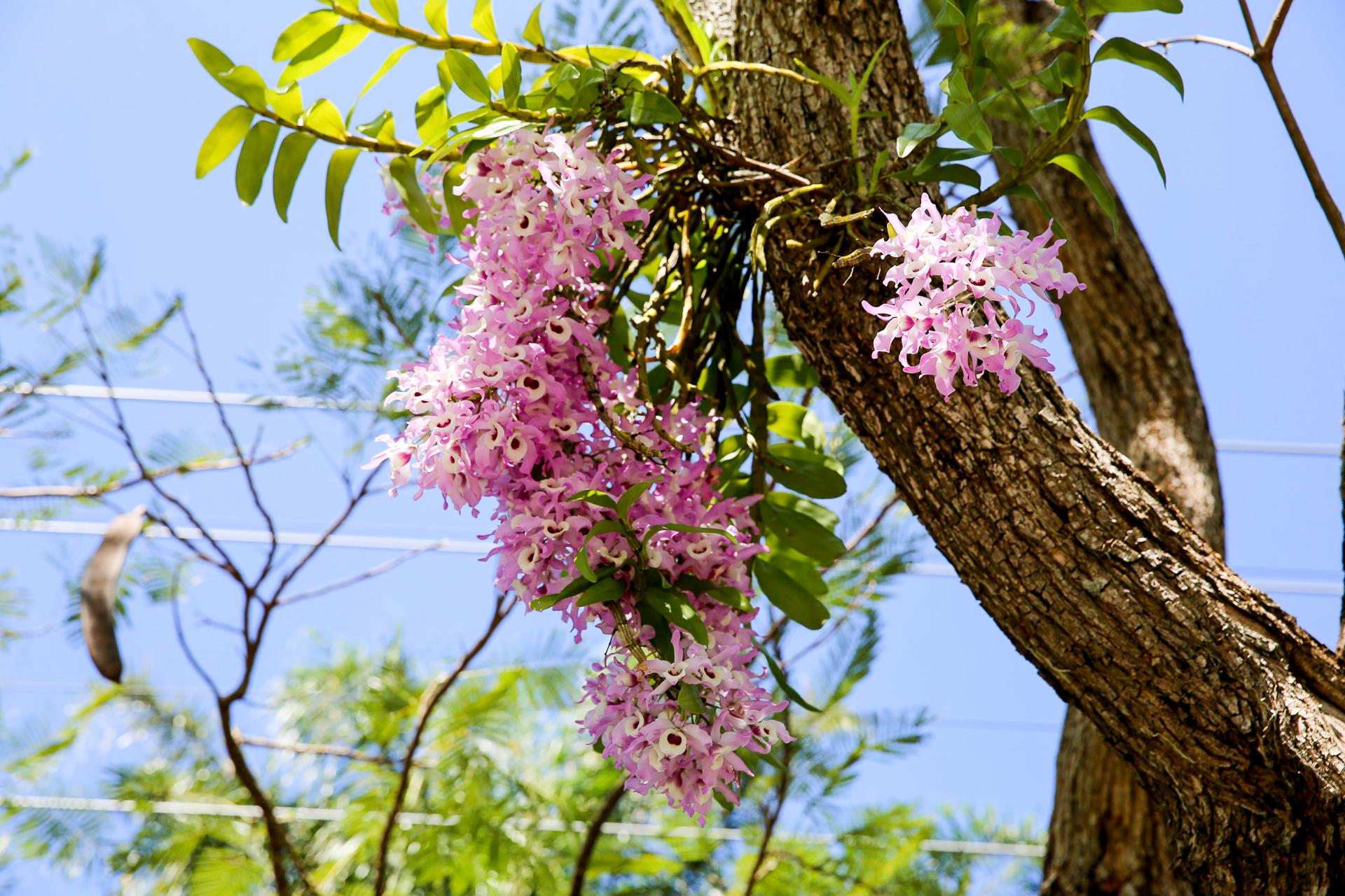Bild: Noosa Ostküste Australien Blüten