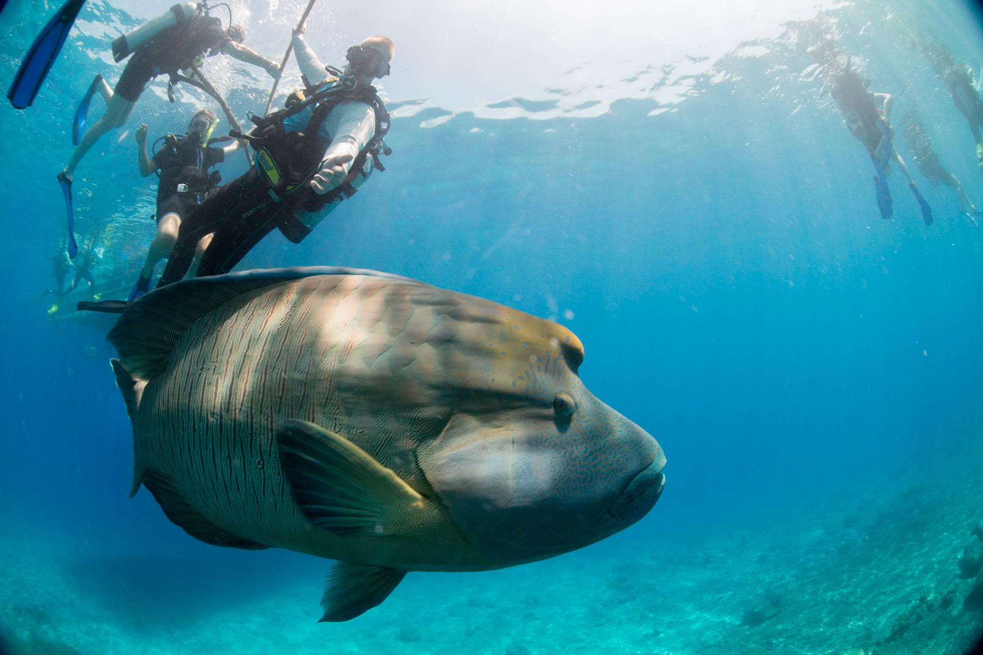 Bild: Tauchen Great Barrier Reef Schnorcheln Australien