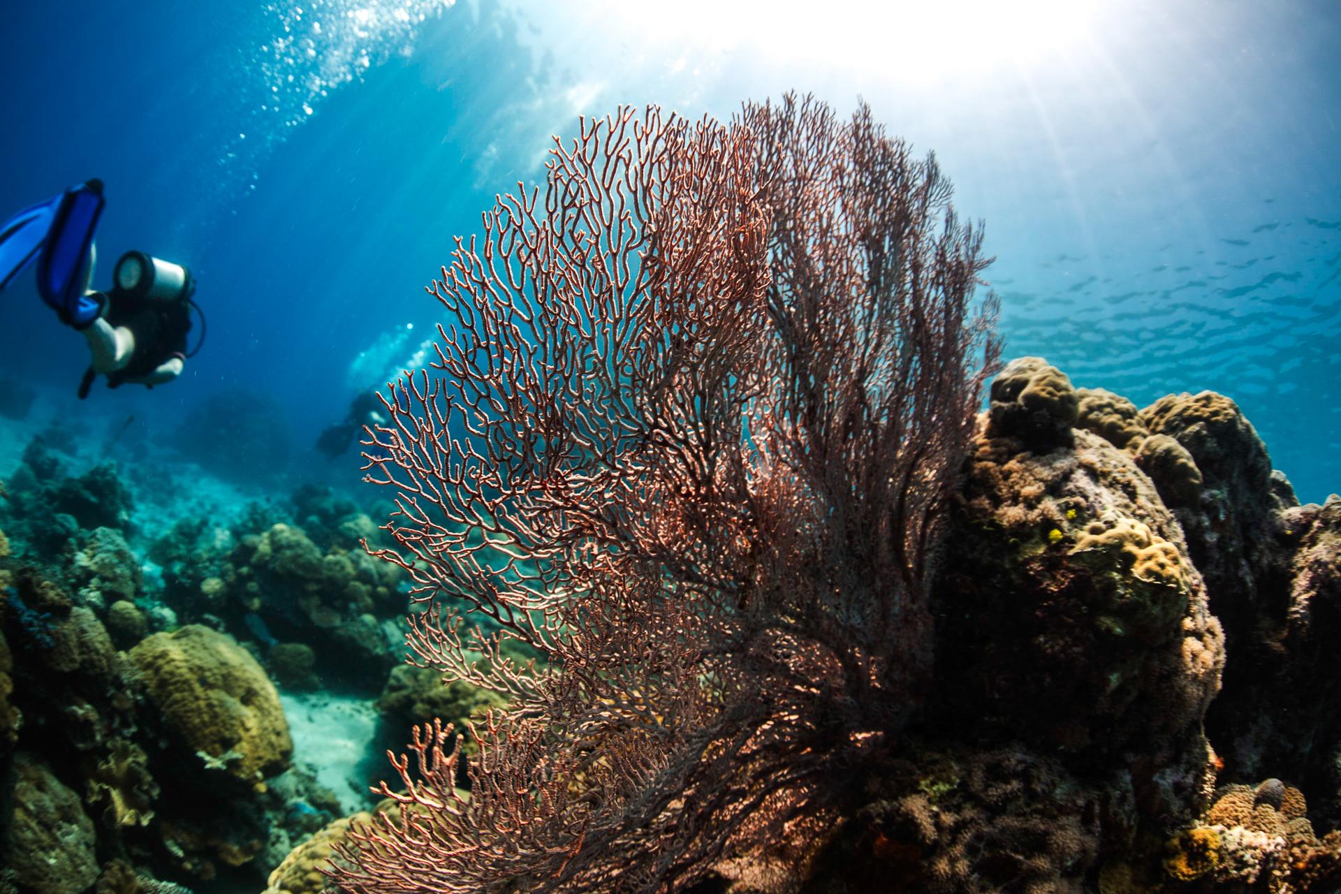 Bild: Korallen während eines Tauchgangs am Great Barrier Reef Australien