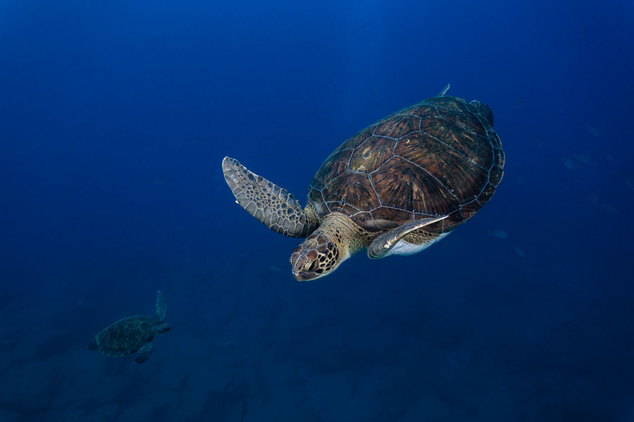 Tipps für bessere Reisefotos Reisefotografie Schildkröten Teneriffa Spanien Meeresschildkröten