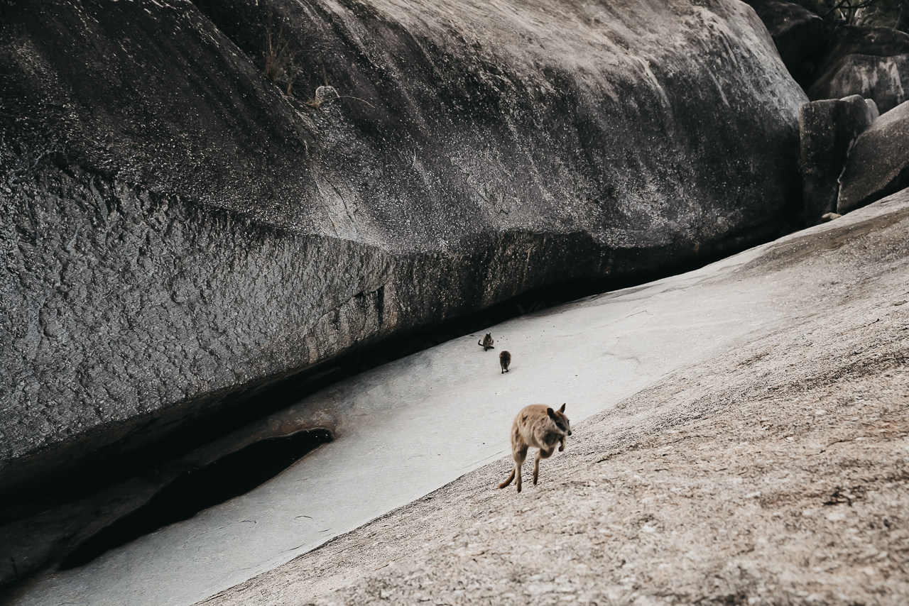 Bild: Geheimtipp Ostküste Australien Roadtrip Queensland Wallabies Kängurus