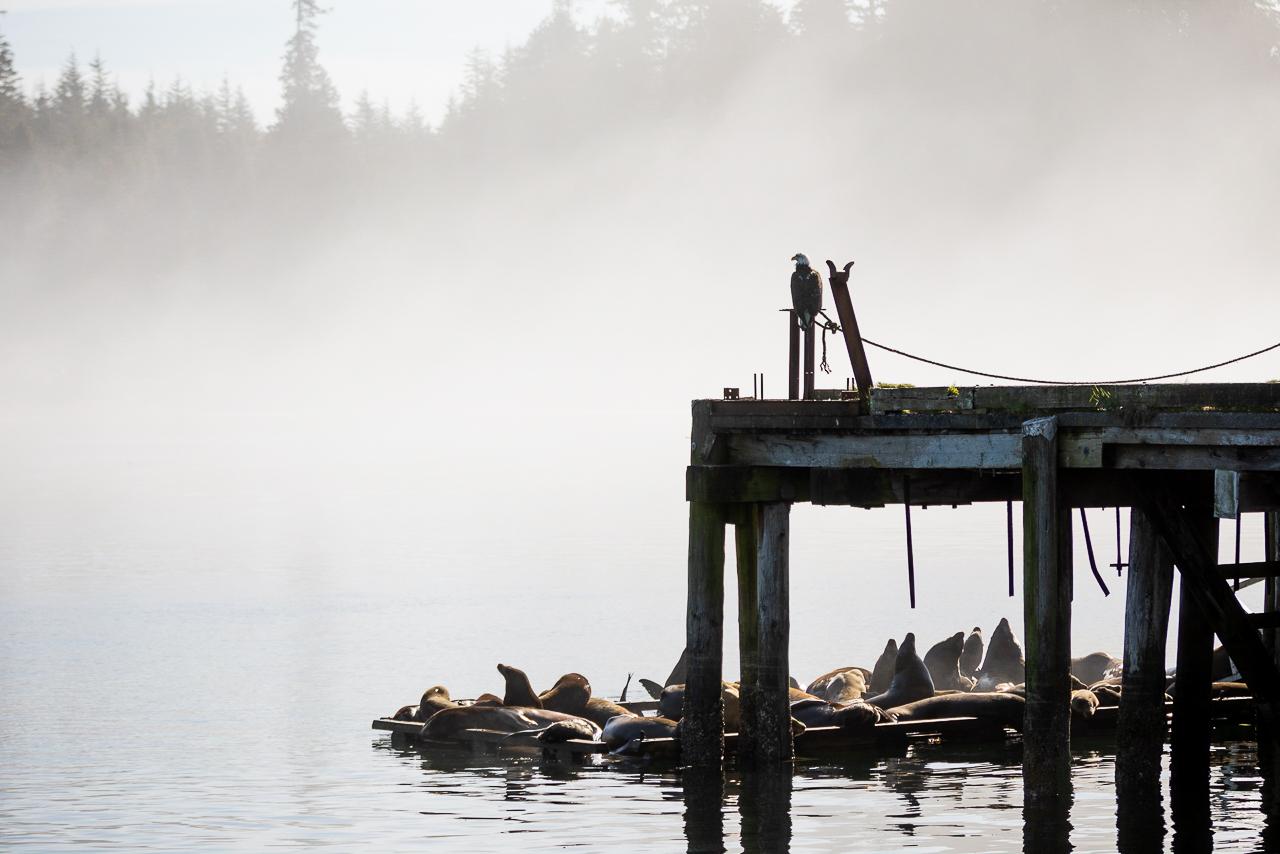 Hafen Ucluelet Vancouver Island