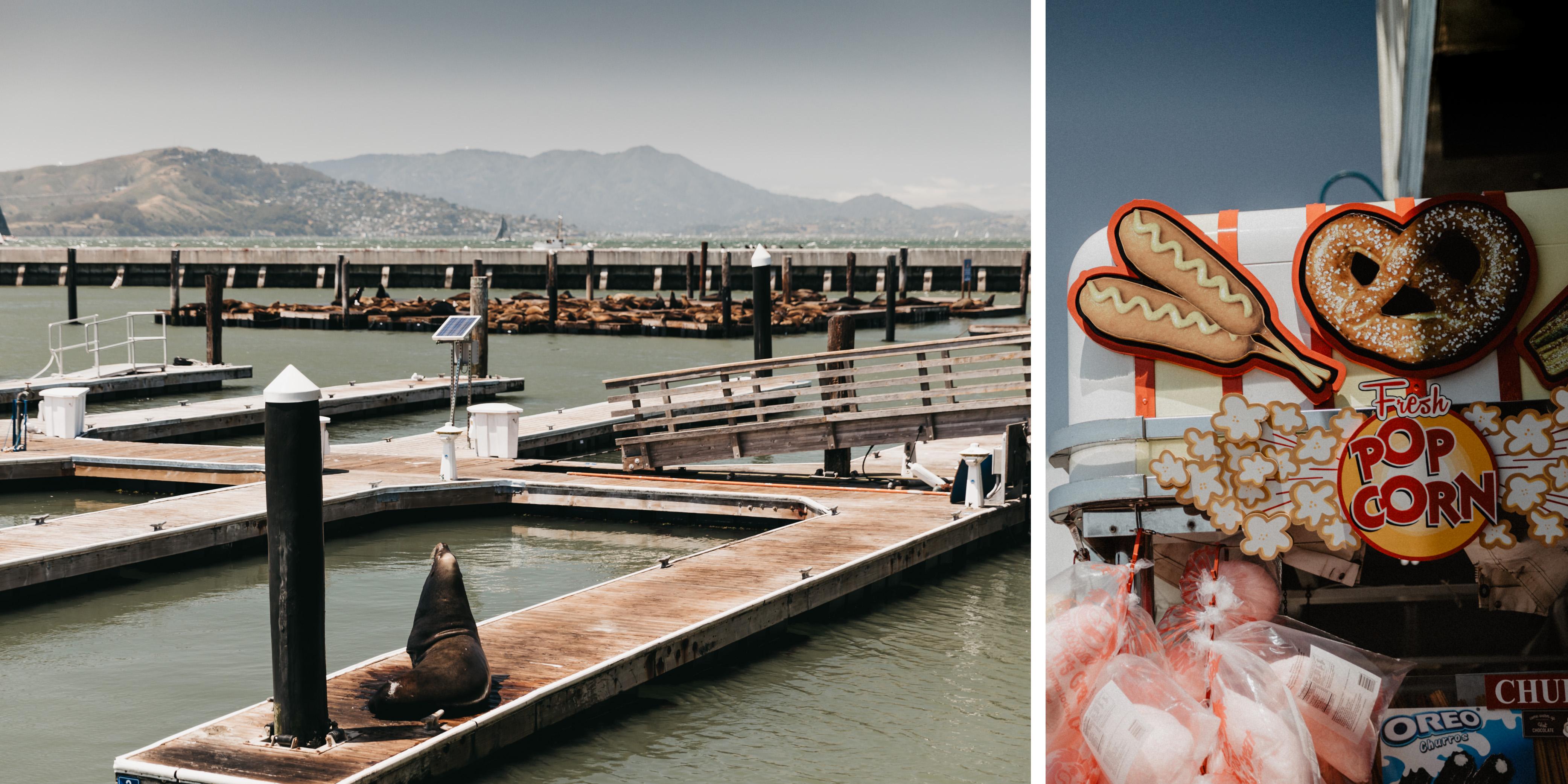 Pier 39 Seelöwen Fishermans Wharf in San Francisco Frühjahr